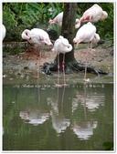 2016.10 台北‧木柵動物園:台北‧木柵動物園