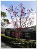 2018.01 台北陽明山‧亞尼克夢想村1號店:P1580790.JPG