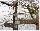 2015.04 台南白河‧林初埤木棉花道:台南白河‧林初埤木棉花道