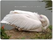 2014.03 新竹北埔‧綠世界:新竹北埔~綠世界