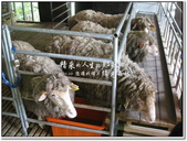 2010.10  悠遊北橫‧綠光森林:1106525358.jpg