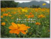 2010.10  悠遊北橫‧綠光森林:1106525325.jpg