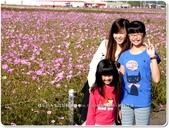 2014.11 台中國際花毯節‧新社花海:台中國際花毯節‧新社花海