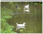 2015.06 桃園‧八德埤塘生態公園:桃園‧八德埤塘生態公園