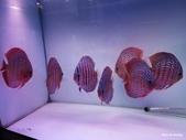 1506人本自然 七彩神仙魚主題餐廳:人本自然 七彩神仙魚主題餐廳