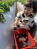 2101來來牛奶草莓園:來來牛奶草莓園
