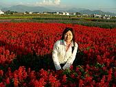 0612新社花海:一串紅