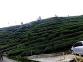 1106銀杏&茶園:茶園