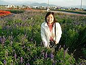0612新社花海:薰衣草