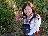 0612新社花海:花