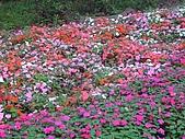 0504五月天桐花祭:花
