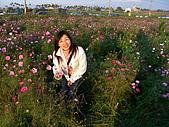 0612新社花海:花花