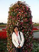 0612新社花海:直的花