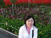 0612新社花海:還是花