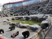 1604日本合掌村+金澤兼六園:奧飛驒熊牧場