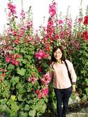 1503員林南區公園蜀葵:員林蜀葵