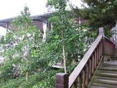 1106銀杏&茶園:銀杏步道