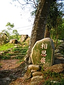 1103東勢林場櫻花:東勢林場