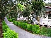 1103東勢林場櫻花:小木屋區