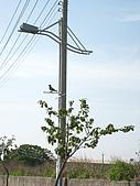 0903南鯤鯓:小鳥電線杆