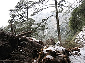 南華山&奇萊南峰-賞雪 2008/02/08~09:IMG_1910.jpg