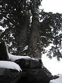 南華山&奇萊南峰-賞雪 2008/02/08~09:IMG_1925.jpg
