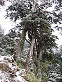 南華山&奇萊南峰-賞雪 2008/02/08~09:IMG_1914.jpg