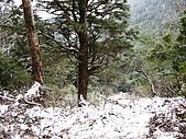 南華山&奇萊南峰-賞雪 2008/02/08~09:IMG_1907.jpg