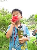 2010小腳ㄚ坪林有機營第二梯:新鮮的花蜜最棒了.JPG