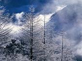 冬季雪景:2009196204724377801