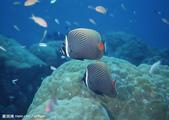 熱帶魚:200921018723997_2