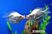 熱帶魚:10108604_275118