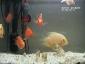 熱帶魚:200701032104103346