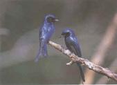 台灣鳥類:new_pa32