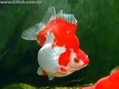 觀賞魚:20060410164054382
