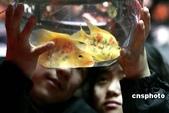 熱帶魚:001558d998c80b00b4c401