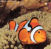 熱帶魚:200871675511658_2