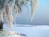 冬季雪景:200812251109529952