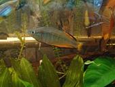 熱帶魚:49381988