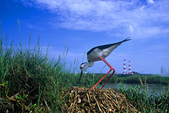台灣鳥類:ks11-05-03