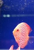 熱帶魚:608830374626428191