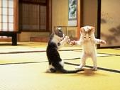 可愛動物:cat005.gif.jpeg