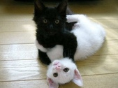 可愛動物:20070208091202496