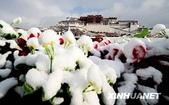 冬季雪景:20090321000926667