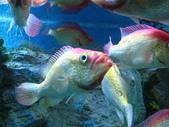 熱帶魚:2008918_34425f516145637b13cf62de1d9f5d90