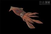 深海魚類:xinsrc_50204051510568433267241