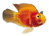 熱帶魚:20080118024959607