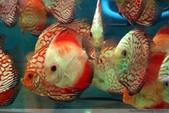 熱帶魚:1760907454303195933
