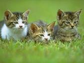 可愛動物:cat007.gif.jpeg