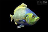 深海魚類:xinsrc_48204051510564372928934
